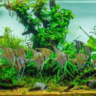Aquariophilies
