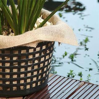 Plante et acccessoire pour jardin aquatique