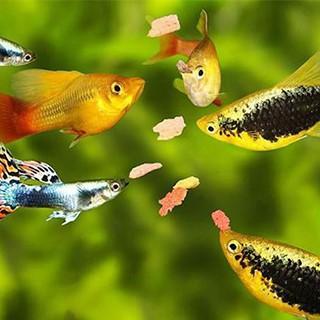 Alimentation JBL pour poissons